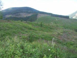 Clearcut logging of Carpathian Mountains in eastern Ukraine, 2014-16 2