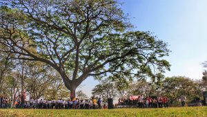 The 11th anniversary celebration continued in the ground around the great Samán tree with music, dance, stands and poetry.